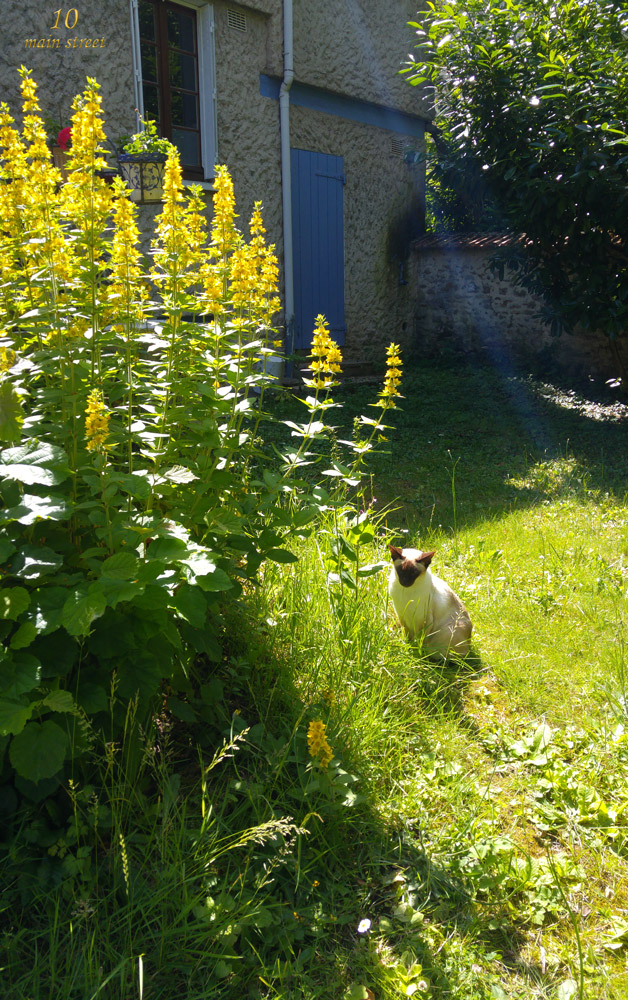 Dinah dans son jardin